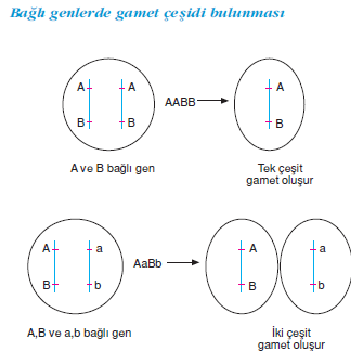 Gameat