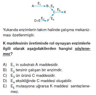 Canlilarintemelbilesimicozumlutest1 (11)