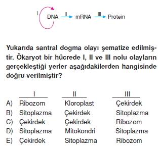 Canlilarintemelbilesimicozumlutest1 (13)