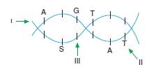 Canlilarintemelbilesimicozumlutest1 (14)