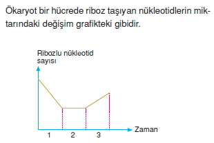 Canlilarintemelbilesimicozumlutest1 (20)