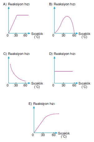 bilimselyontem2000liyillarinbilimibiyolojicanlilarinortakozelliklericozumlutest1 (11)