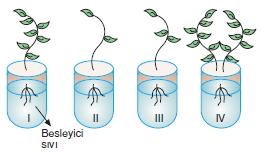 bilimselyontem2000liyillarinbilimibiyolojicanlilarinortakozelliklericozumlutest1 (3)