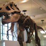 dinozorlar-nasil-yok-oldu (3)