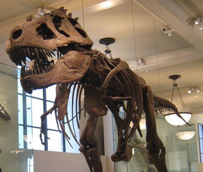 Dinozorlar nasil yok oldu 3