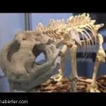 dinozorlar-nasil-yok-oldu (6)