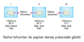 Üremevegelismekonutesti5001