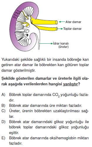Bosaltimsistemicözümlütest1001