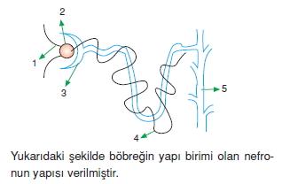 Bosaltimsistemikonutesti3003