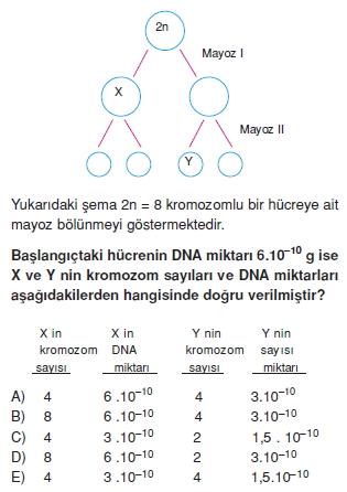 Canlilarintemelbilesimicozumlutest1 (12)