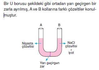 Canlilarintemelbilesimicozumlutest1 (16)