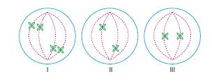 Canlilarintemelbilesimicozumlutest1 (2)