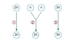 Canlilarintemelbilesimicozumlutest1 (32)