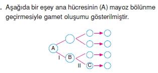 Canlilarintemelbilesimicozumlutest1 (3)