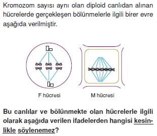Canlilarintemelbilesimicozumlutest1 (36)