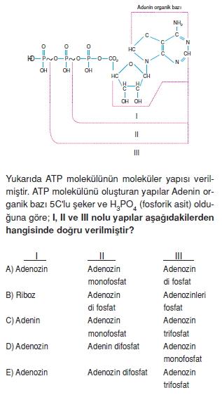 Canlilarintemelbilesimicozumlutest1 (8)