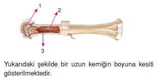 Destekvehareketsistemikonutesti3004