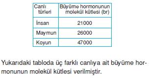 Endokrinsistemkonutesti1001
