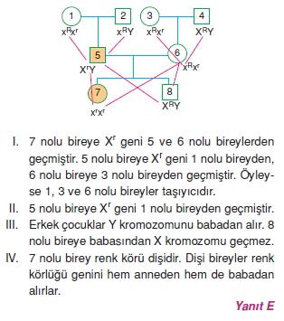 Kalitimcözümler1007