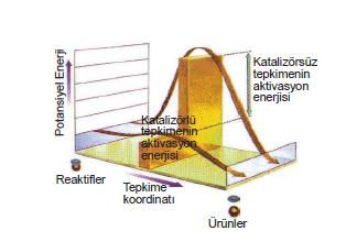 Katalizor