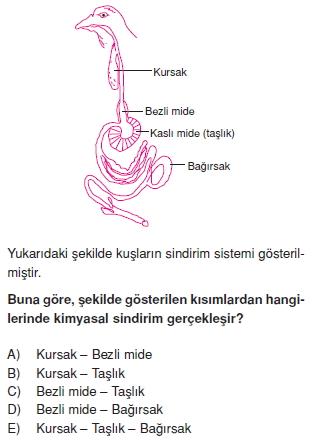 Sindirimsistemikonutesti2001