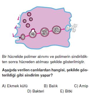 Sindirimsistemikonutesti2003
