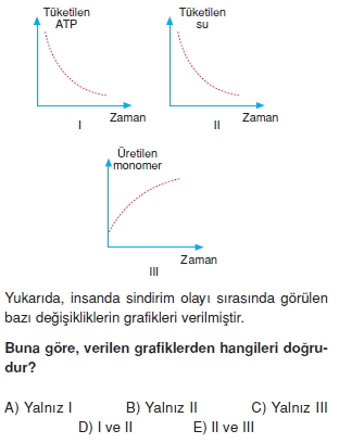 Sindirimsistemikonutesti2004