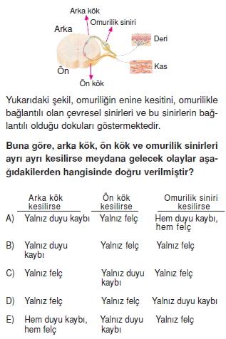 Sinirsistemikonutesti2001