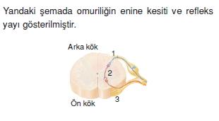 Sinirsistemikonutesti3004