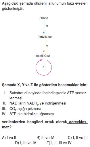 Solunumkonutesti3004