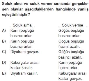 Solunumsistemikonutesti1006