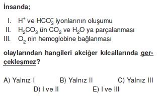 Solunumsistemikonutesti2001