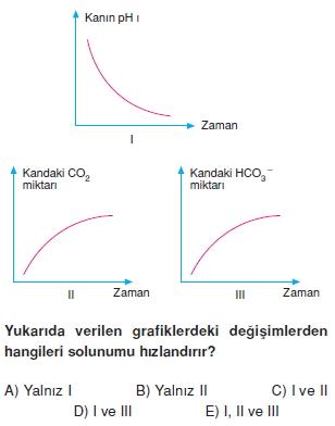 Solunumsistemikonutesti2002