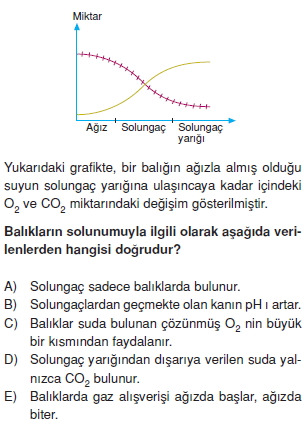 Solunumsistemikonutesti4006