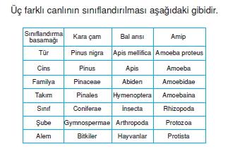 canlilarinsiniflandirilmasicözümlütest1002