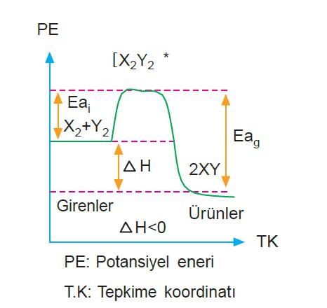 ekzotermik_tepkime