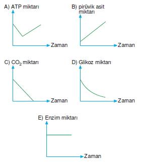 solunumcözümlütest2 (12)