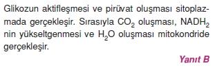 solunumcözümlütest2 (16)