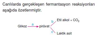 solunumcözümlütest2 (6)