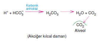Akciger_kilcal_damari