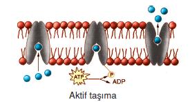 Aktif_Tasima