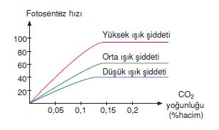 CO2_Miktari_ve_isik_siddeti