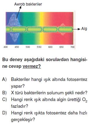 Canlilarveenerjiilişkilericözümlütest1011