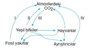 Canlilarveenerjiilişkilerikonutesti3001