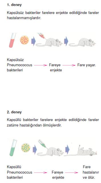 DNA_Fare_deneyi