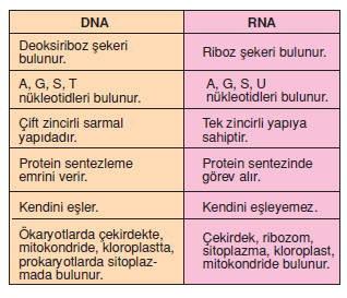 DNA_RNA_Karsilastirilmasi