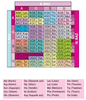 DNA_baz_dizilimleri