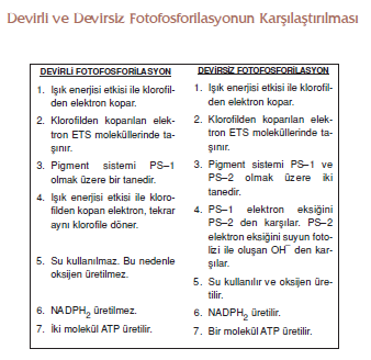 Devirli_ve_Devirsiz_Fotofosforilasyonun_Karsilastirilmasi