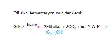 Etil_alkol_fermantasyonunun_denklemi