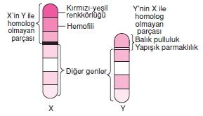 Hücrebölünmesivekalitimcözümlütest1010